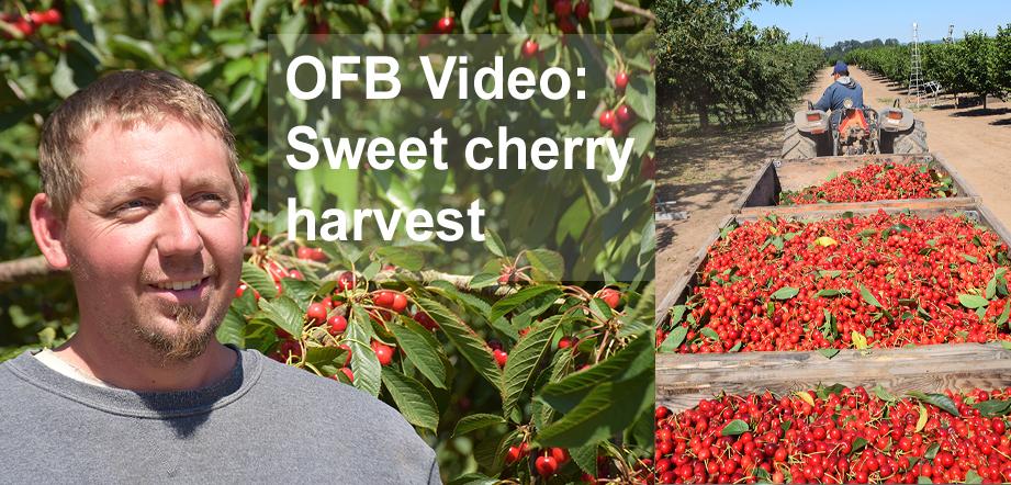 harvest videos