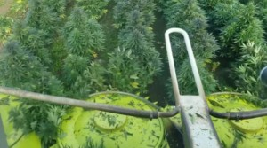 Hemp farming resources – Oregon Farm Bureau